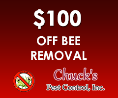 $100 Off Bee Removal