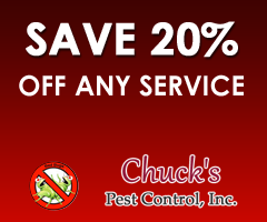 Save 20% Off Any Service